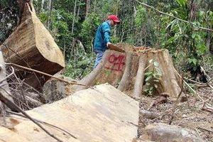 Truy tìm lâm tặc phá rừng khu vực Nam và Bắc Trà My