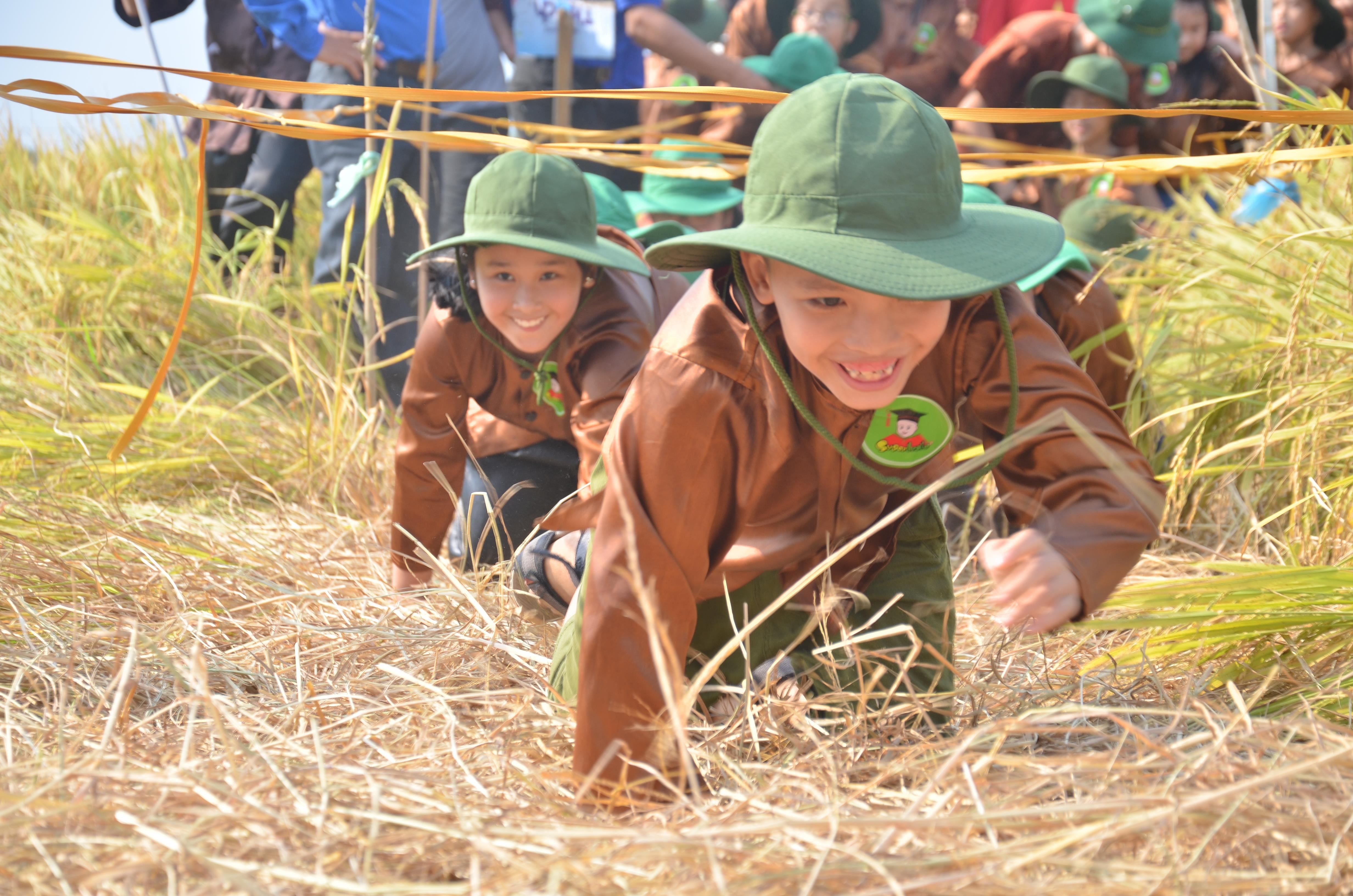 Hàng trăm 'nông dân nhí' ướt đẫm mồ hôi... gặt lúa