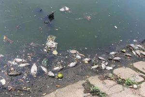 Đà Nẵng: Cá chết nổi trắng kênh Phú Lộc và Khe Cạn