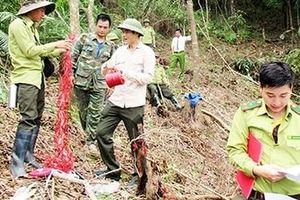 Quảng Ninh xử lý hình sự vụ hủy hoại rừng phòng hộ Khe Tao