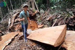 Một người ở Kon Tum bị xử phạt 245 triệu đồng vì mua lâm sản trái phép