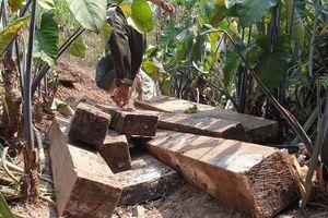 Khởi tố 7 đối tượng phá rừng di sản Phong Nha - Kẻ Bàng