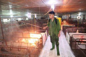 Phòng ngừa dịch tả lợn châu Phi bằng an toàn sinh học