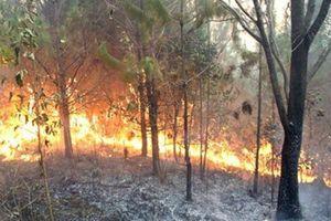 Sơn La: Cháy rừng gây thiệt hại gần 250ha