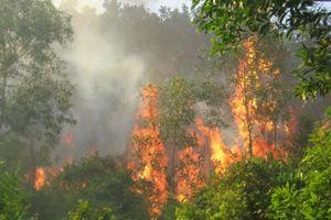 Lào Cai: Xảy ra nhiều vụ cháy rừng do nắng nóng