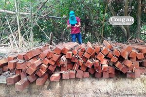Thảm sát rừng nguyên sinh (Kỳ 2: Mở đường trái phép vào rừng tự nhiên)