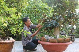 Đồng Tháp: Ở nơi này, dân kiếm bộn tiền nhờ bonsai xoài, vú sữa