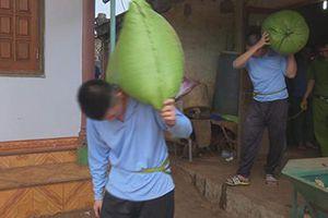 Đắk Lắk: Bắt nhóm trộm cắp nông sản để thực nghiệm điều tra