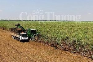Cơ cấu lại ngành mía đường Việt Nam để tăng năng lực cạnh tranh hội nhập