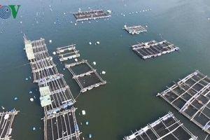 Phú Yên Kiên quyết di dời lồng bè thủy sản tự phát