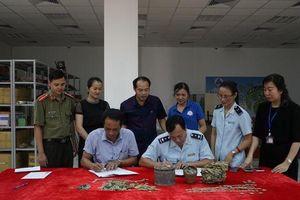 Lào Cai: Gần 20kg tiền xu cổ 400 năm tuổi suýt bị xuất lậu sang Trung Quốc