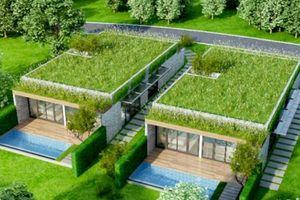 Kỹ thuật trồng cây trên mái nhà chống nóng