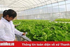 Toàn tỉnh xây dựng 5.000m2 nhà lưới trồng rau thủy canh