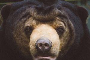 'Rừng chảy máu, diệt thú rừng' ở Việt Nam lên báo Mỹ