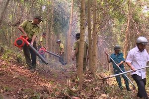 Phòng cháy chữa cháy rừng ở Hoài Ân (Bình Định): Nhận diện nguy cơ, chủ động phòng tránh