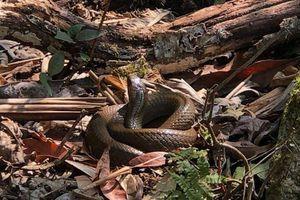 Chuyện chưa kể về 'thung lũng rắn' trên dãy Hoàng Liên Sơn
