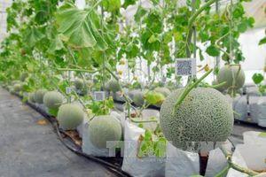 Ươm tạo nhân lực cho nông nghiệp công nghệ cao