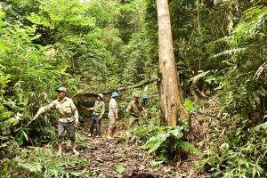 Sơn La: Hỗ trợ hơn 8.000 tấn gạo cho đồng bào dân tộc trồng, chăm sóc, bảo vệ rừng