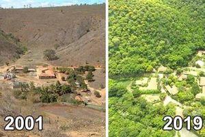 Kỳ tích của nhiếp ảnh gia Brazil khôi phục cả khu rừng sau 20 năm