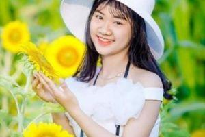 Cánh đồng hoa hướng dương tuyệt đẹp lần đầu có ở Quảng Bình
