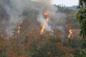 Nghệ An: Gần 1.500ha đất rừng tự nhiên sẽ bị 'xóa sổ' để phục vụ dự án?