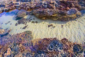 Ngắm san hô trên cạn đẹp ảo diệu tại Phú Yên