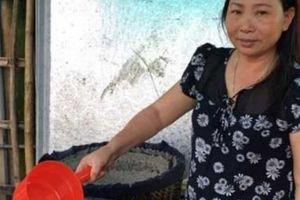 Thanh Hóa: Giọt mắm Khúc Phụ ngư dân uống mỗi chén khi ra khơi