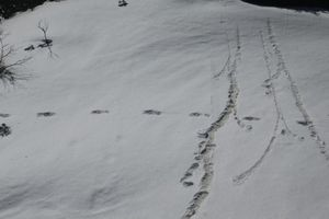 Quân đội Ấn Độ công bố hình ảnh dấu chân của 'Người tuyết' trên dãy Himalaya