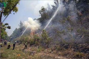 Đà Nẵng dập tắt một vụ cháy tại rừng Sơn Trà