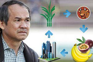 Dứt bỏ duyên nợ với bất động sản, bầu Đức mơ trở thành người trồng chuối hàng đầu châu Á