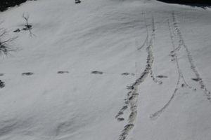 Quân đội Ấn Độ tuyên bố phát hiện dấu chân... Người tuyết