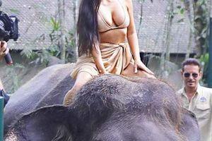 Kim 'siêu vòng 3' gây bức xúc vì... mặc mát mẻ cưỡi voi