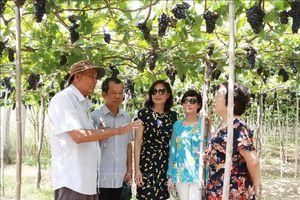 Khách du lịch đến Ninh Thuận dịp nghỉ lễ tăng gấp ba lần năm trước