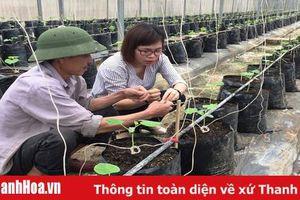Huyện Hà Trung phát triển được 5.000 m2 nhà lưới