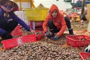 Ngư dân Hà Tĩnh vượt biển khai thác sò lụa trúng đậm ngày nghỉ lễ