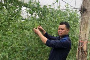 Chuyện thoát nghèo ở các huyện 30a Hà Giang