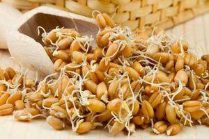 Có thể bạn chưa biết: Công dụng tuyệt vời của mầm lúa mạch