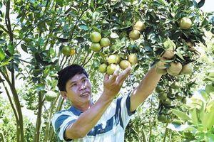 Cây ăn quả, thế mạnh mới của nông nghiệp Tây Nguyên
