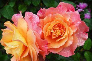 Dự đoán ngày mới Chủ nhật, 5/5/2019 của 12 cung hoàng đạo: Cự Giải tình cảm ngọt ngào