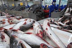 Lãi kỷ lục, thủy sản Nam Việt tăng mức chia cổ tức