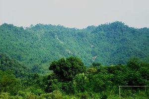 Chủ tịch UBND TP Hà Nội yêu cầu kiểm tra thông tin xây dựng trên đất rừng tại Thạch Thất
