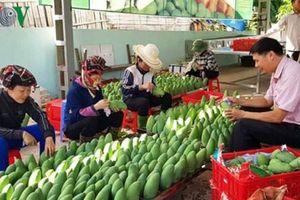 Xuất khẩu chính ngạch vào Trung Quốc: Tiêu chuẩn ngày càng khắt khe