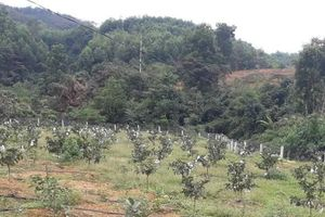 Bắt nhóm cán bộ Ban Quản lý rừng phòng hộ vì lập hồ sơ khống