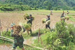 Đồn Biên phòng Cù Bai giúp dân gặt lúa