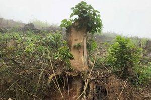 Nghệ An: Bắt giam nhóm cán bộ Ban quản lý rừng phòng hộ làm giả hồ sơ chiếm đoạt tiền tỷ