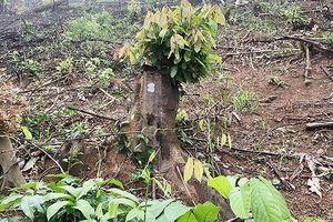 Nguyên trưởng ban và hai cán bộ Ban quản lý rừng phòng hộ Yên Thành bị bắt tạm giam