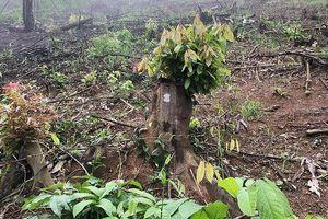 Bắt giam nguyên trưởng ban quản lý rừng phòng hộ Yên Thành