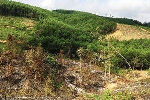 Bắt tạm giam 3 cán bộ Ban quản lý rừng phòng hộ huyện Yên Thành