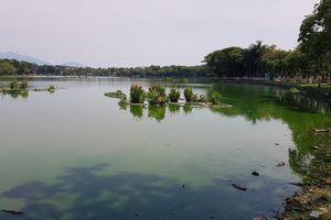 Nước thải đen ngòm chảy thẳng vào công viên lớn nhất Đà Nẵng