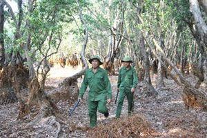Nguy cơ cháy Vườn quốc gia Tràm Chim ở cấp cực kỳ nguy hiểm
